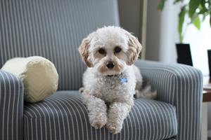 Make sure you don't forget about your pet when planning your renovation and update your home with changes that will work for both you and them.