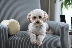 Pet friendly renovation choices